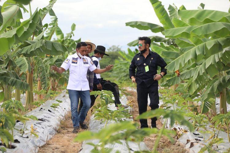 Mentan saat meninjau kebun porang milik Kelompok Tani Semangat Millenial binaan Syaharuddin di Desa Talumae, Kecamatan Watan Sidenreng, Kabupaten Sidenreng Rappang (Sidrap), Sulawesi Selatan (Sulsel).