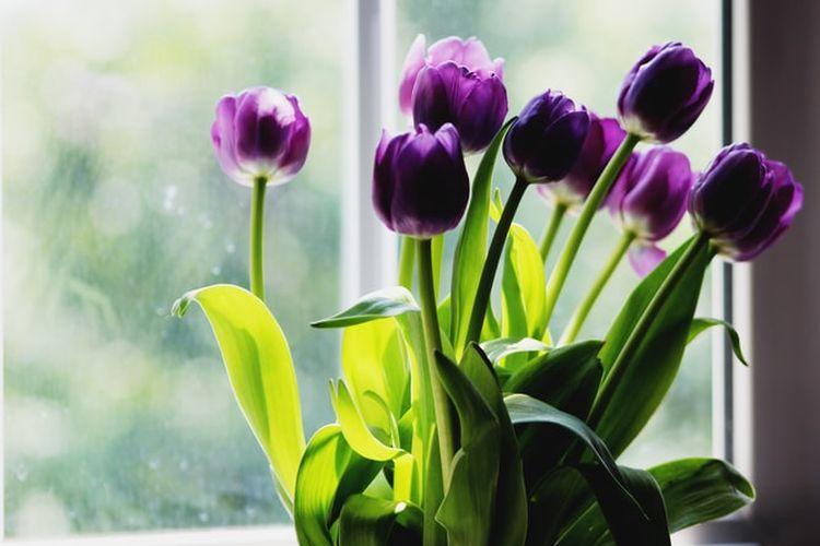 Ilustrasi bunga tulip dalam vas