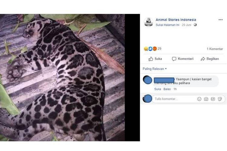 Viral, foto macan dahan sebelum dikuliti oleh dua orang yang beredar di media sosial Facebook pada Sabtu (29/6/2019).