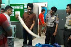 Penyidik BPPLH Duga Ada Spesialis Pemburu Gajah di Malaysia
