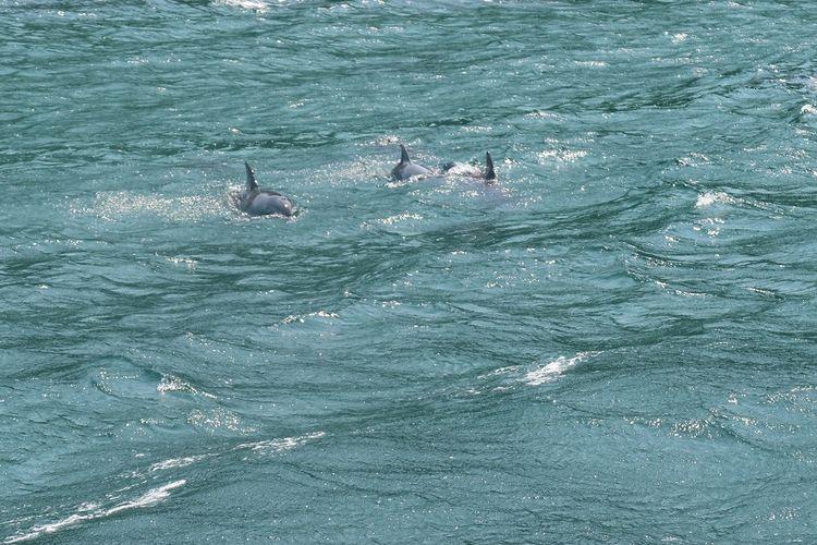 Lumba lumba di perairan Nelson Bay, Australia