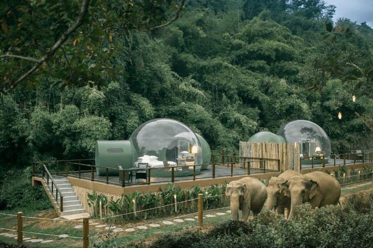Jungle Bubbles yang bisa dipesan oleh tamu memberikan pengalaman menginap dalam gelembung transparan sambil melihat gajah