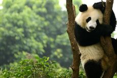 Telanjur Pesan Paket Wisata ke China? Agen Perjalanan Tawarkan Alternatif