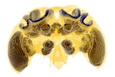 Pestisida Dapat Merusak Fungsi Otak pada Bayi Lebah, Kenapa Begitu?