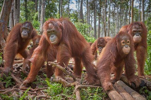 Hewan Terancam Punah dan Kerusakan Lingkungan, Apa Hubungannya dengan Wabah Penyakit Baru?