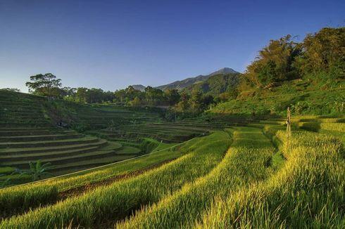 Itinerary 1 Hari di Trawas Mojokerto, Ada Terasering Hijau Selotapak