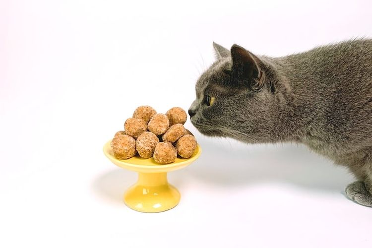 Ilustrasi kucing makan