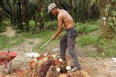 Ekonom: Industri Sawit Salah Satu Penopang Ekonomi RI di Tengah Pandemi