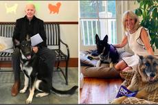 Belajar dari Joe Biden soal Manfaat Pelihara Anjing