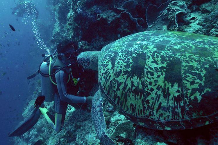 Diving di Bunaken, Sulawesi Utara.