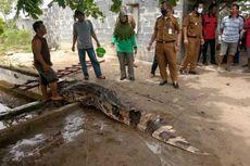 Cara Warga Riau Pancing Buaya Sepanjang Hampir 4 Meter