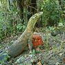 Desa Pota, Alternatif Tempat Wisata Melihat Komodo di Flores