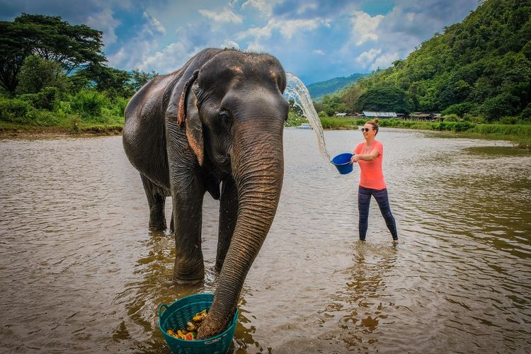 The Elephant Jungle Sanctuary, Chiang Mai, Thailand DOK Shutterstock