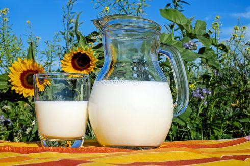 3 Khasiat Susu Kambing untuk Kesehatan