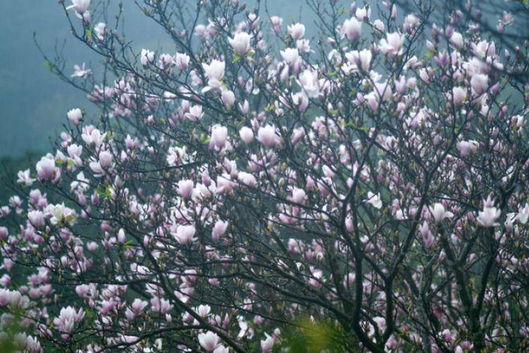 Dahan Pohon Bisa Naik Dan Turun Sendiri Tanpa Angin Apa Sebab