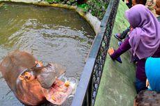 GLZoo Yogyakarta Siapkan Tempat Istirahat Pengunjung