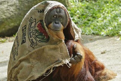 Peringati Hari Primata, Ini Kondisi Rehabilitasi Satwa di Yogyakarta