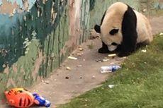 Foto Panda Makan Sampah Viral di Internet Picu Kemarahan