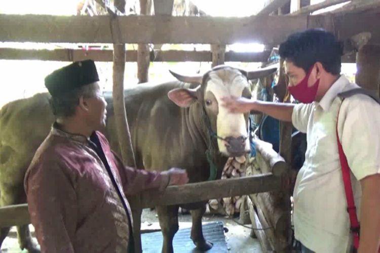 Sapi Berbobot 1,2 Ton Dibeli Jokowi, Pemiliknya Sujud Sukur