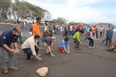 BKSDA Yogyakarta Lepasliarkan 1.000 Ekor Tukik di Pantai Trisik Kulon Progo