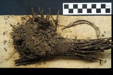 Temuan Buket Bunga Berusia 2000 Tahun, Masih Terlihat Bentuknya