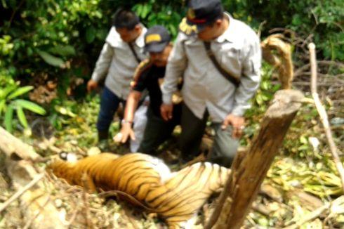 Seorang Warga Diterkam Harimau, Tim BBKSDA Riau Dikerahkan ke Lokasi