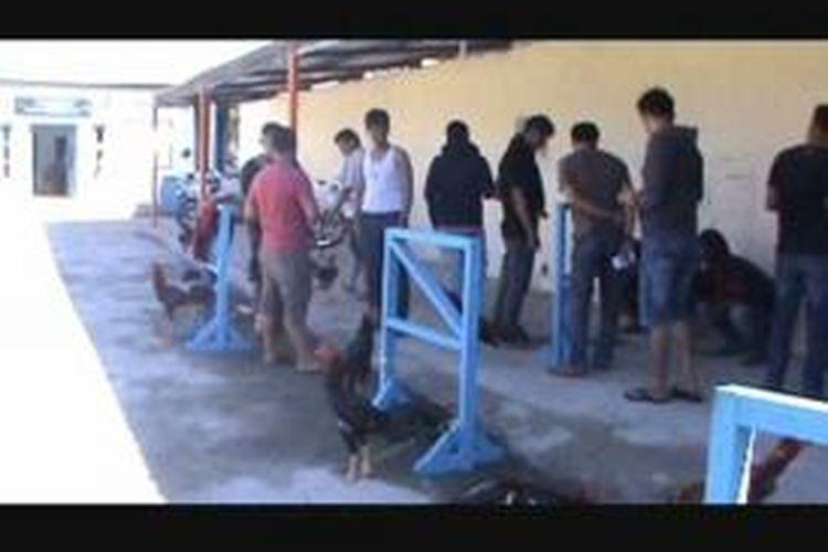 65 pelaku judi sabung ayam ditangkap bersama kepala dinas pertambangan dan  energy Mamuju, Jalaluddin Duka yang juga saudara kandung bupati Mamuju, Suhardi Duka dan sejumlah pengusaha lainnya.