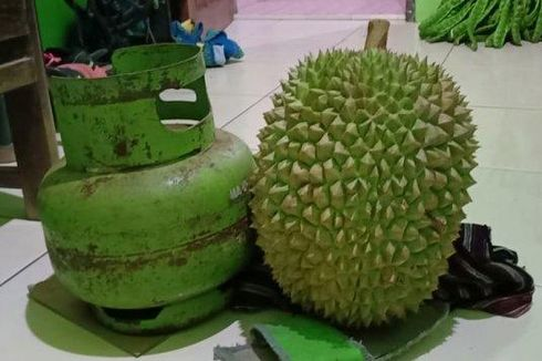 Durian Shinta, Durian Organik asal Semarang yang Punya Banyak Penggemar