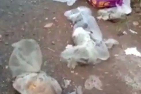 Geger, 20 Kucing Ditemukan Mati Terbungkus Plastik, Tulang Patah dan Keluarkan Darah
