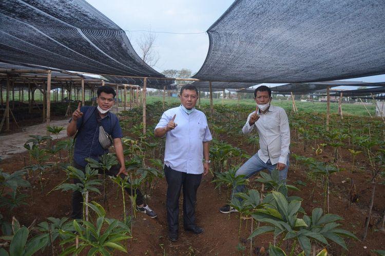 (kiri ke kanan) Yohanes Tampubolon, Edy Effendi dan Idris Tampubolon berfoto di lahan pertanaman porang di Jalan Balai Desa, Pasar 12 Patumbak, Kecamatan Patumbak, Deli Serdang,