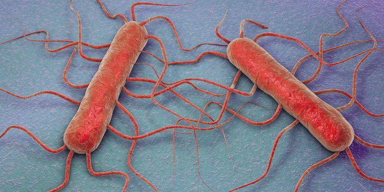 Ilustrasi bakteri Listeria monocytogenes, penyebab penyakit listeria atau listeriosis. Bakteri ini dikabarkan ditemukan di jamur enoki.