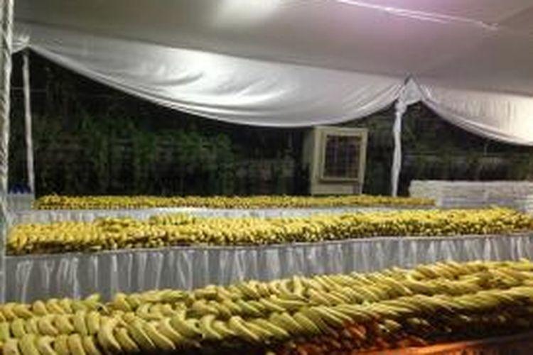 Ribuan pisang yang tersedia bagi para peserta BII Maybank Bali Marathon, Minggu (14/9/2014).