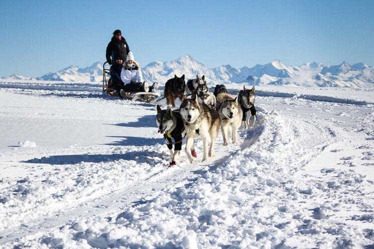 Tempat wisata di Swiss - Atraksi wisata Dogsled Rides di Glacier 3000.