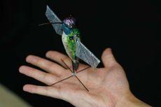 Gantikan Drone, Ahli Ciptakan Robot Kolibri untuk Misi Penyelamatan