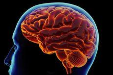 Apa Beda Otak Kanan dan Kiri?
