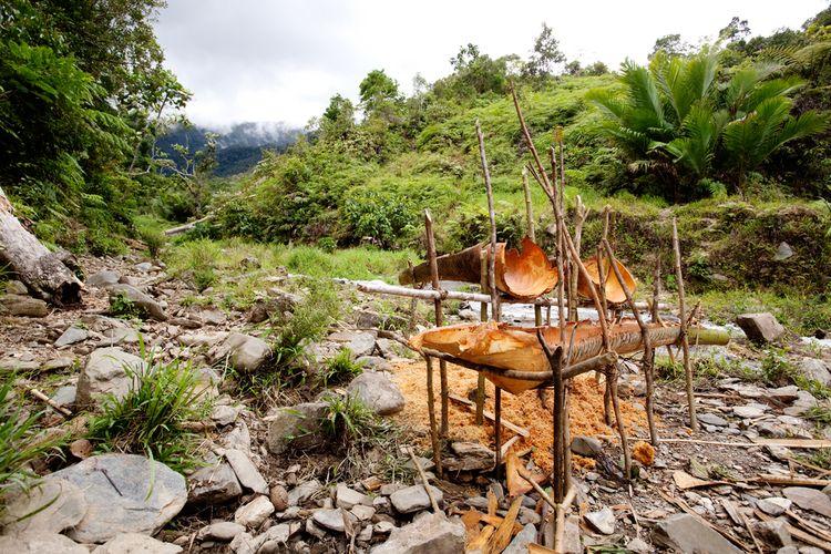 Ilustrasi cara mengolah sagu secara tradisional di Papua.
