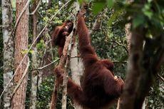 Wisata di Tanjung Puting, Coba Rain Forest Trekking
