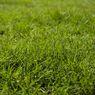 Cara Membuat Pupuk Kompos dari Rumput Liar untuk Menyuburkan Tanaman