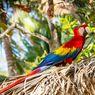 5 Fakta Menarik Burung Macaw, Berukuran Besar dan Eksotis