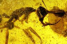 Semut Neraka Ditemukan, Bertanduk dan Mengisap Darah Mangsanya
