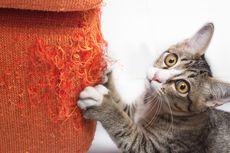 Tidak Buruk, Ini Alasan Mengapa Kucing Menggaruk Furnitur