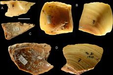Bukti Baru, Neanderthal Kumpulkan Kerang dari Lautan untuk Bikin Alat