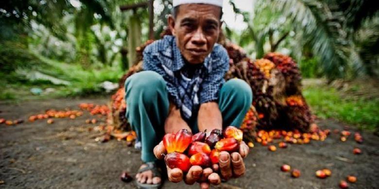 Indonesia adalah negara pemasok minyak sawit terbesar dunia.