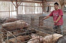 Awal Mula Renold Jadi Peternak Babi Beromzet Miliaran: Berhenti Kuliah karena Bosan