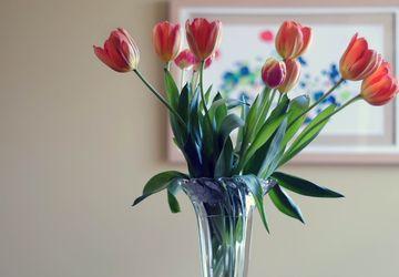Air Dingin, Hangat, dan Panas, Mana yang Baik untuk Bunga Potong?