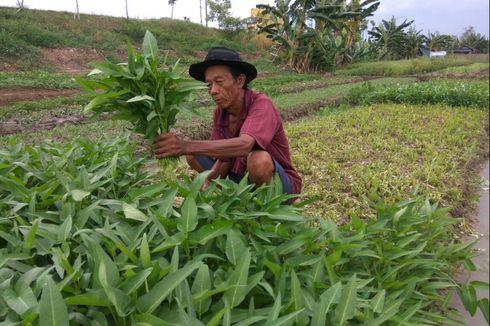Menengok Aktivitas Petani di Sudut Kota Jakarta
