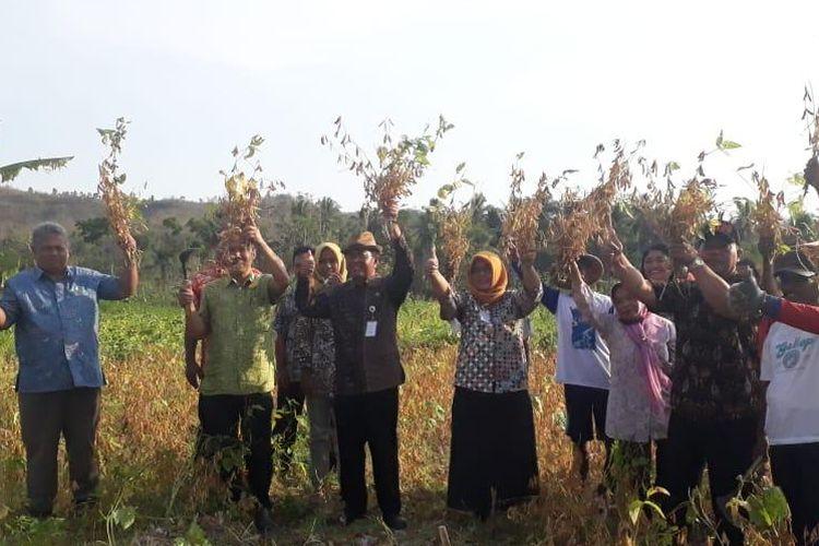 Kelompok Tani (Poktan) Rukun Agawe Makmur Beji Patuk bersama DPP Kabupaten Gunungkidul melakukan panen kedelai.