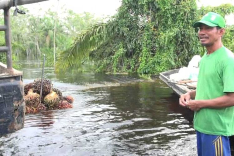 Husin (52), menjual sawit yang berhasil ia panen di tengah banjir yang melanda satu hektar kebunnya di Desa Buluh Cina, Kecamatan Siak Hulu, Kabupaten Kampar, Riau, Jumat (20/12/2019).