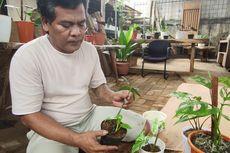 Kisah Perjuangan Pedagang Tanaman Hias di Depok hingga Dapat Barter Rumah Rp 500 Juta