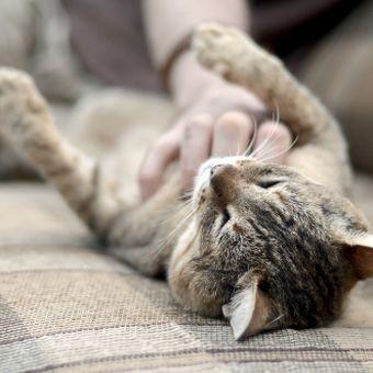 Kucing suka jika dagu dan lehernya dielus.